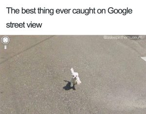 Adorable Dog Memes and Funny Cat Pictures That Will Make Your Day (Thursday morning funny memes).