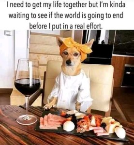 Funny Thursday Memes: 25 Funny PicturesAdorable Dog Memes and Funny Cat Pictures That Will Make Your Day (Thursday morning funny memes)