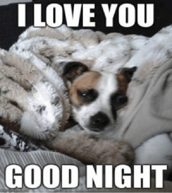 tlove you good night goodnight memes for him
