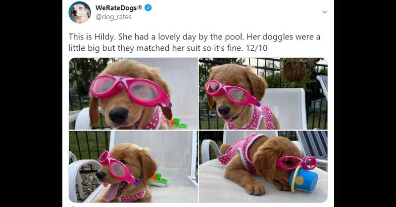 pool her doggles were little big but they matched her suit so s fine 1210 adorable puppy in goggles