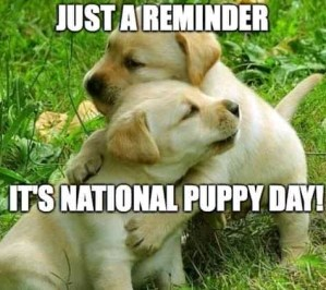 Happy National puppy day 2021-VIDEO (29 funny dog memes)