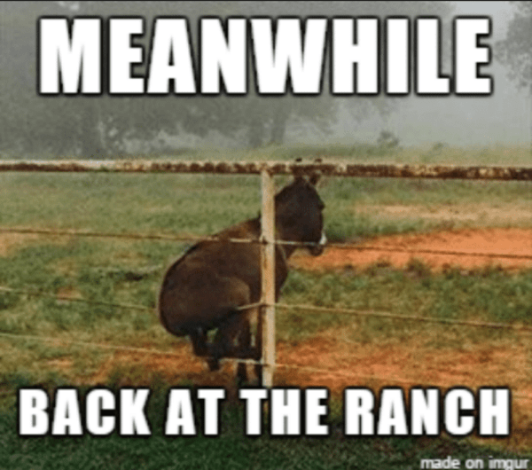23 funny farm pictures and hilarious animal memes