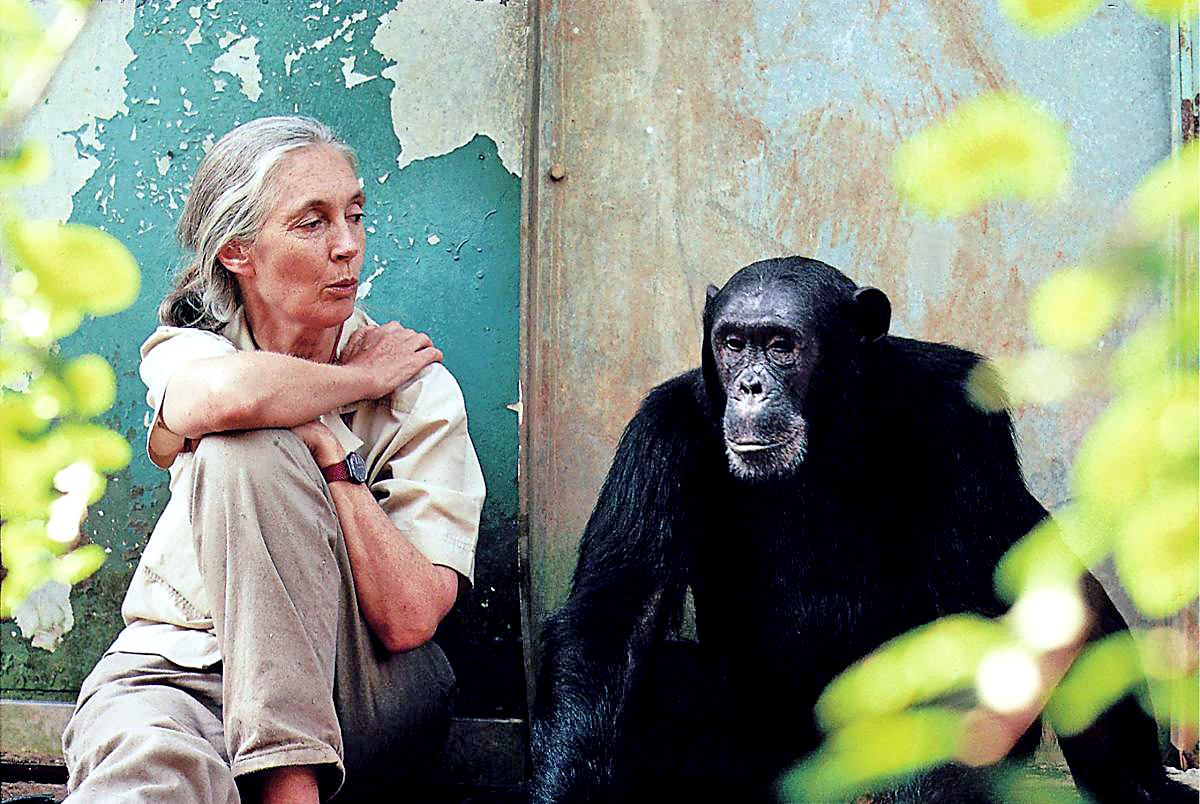 Jane Goodall To Speak At Unk March 20