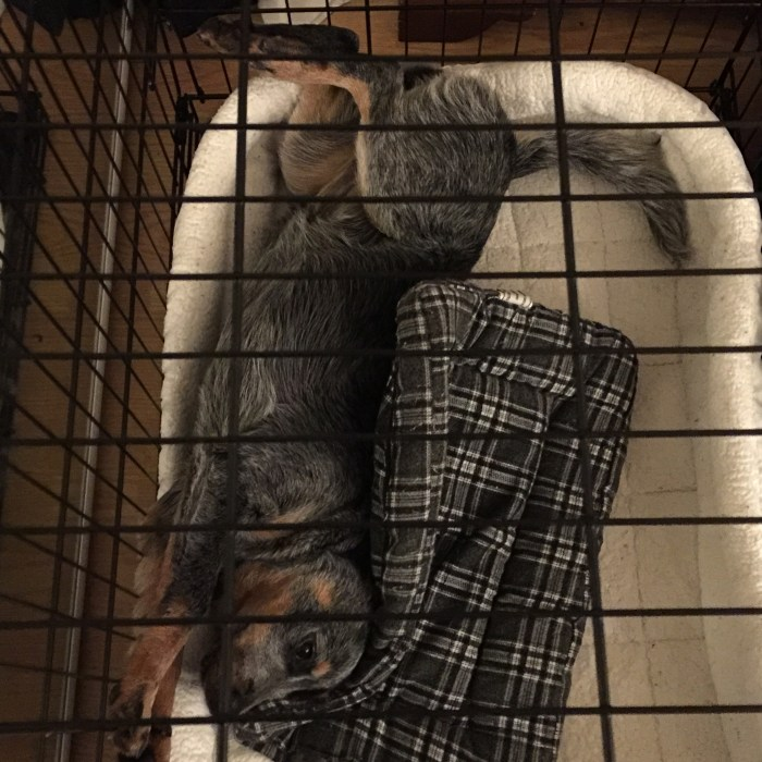 Bella is crate trained