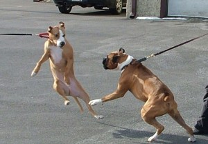 lunging on lead