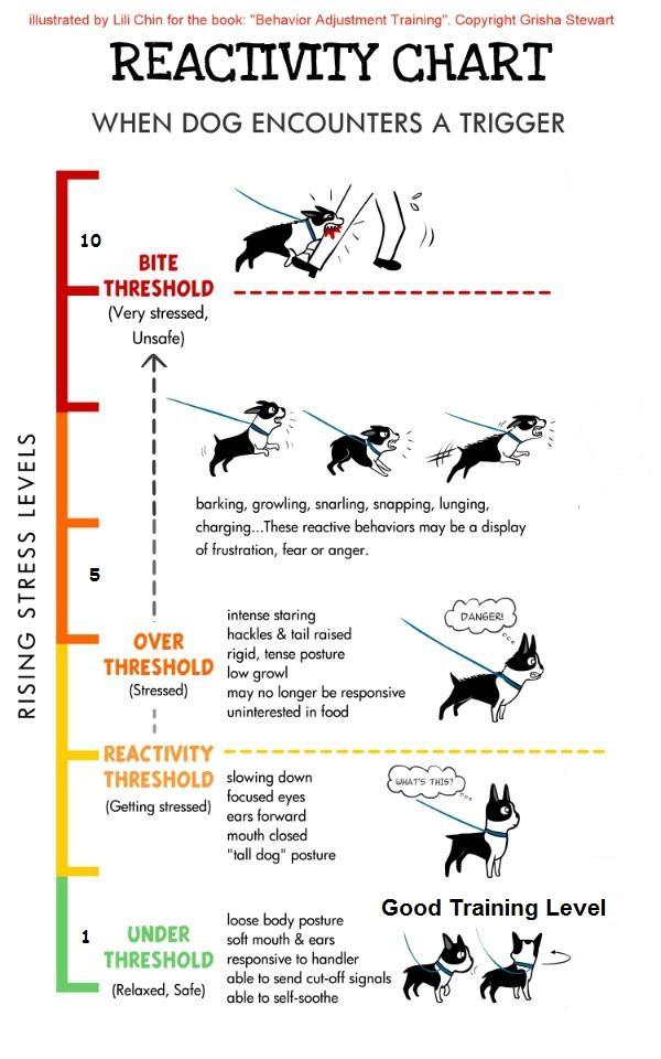 will my dog bite?