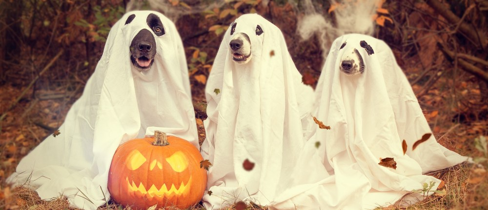 Halloween – Make sure your dog doesn't get spooked!