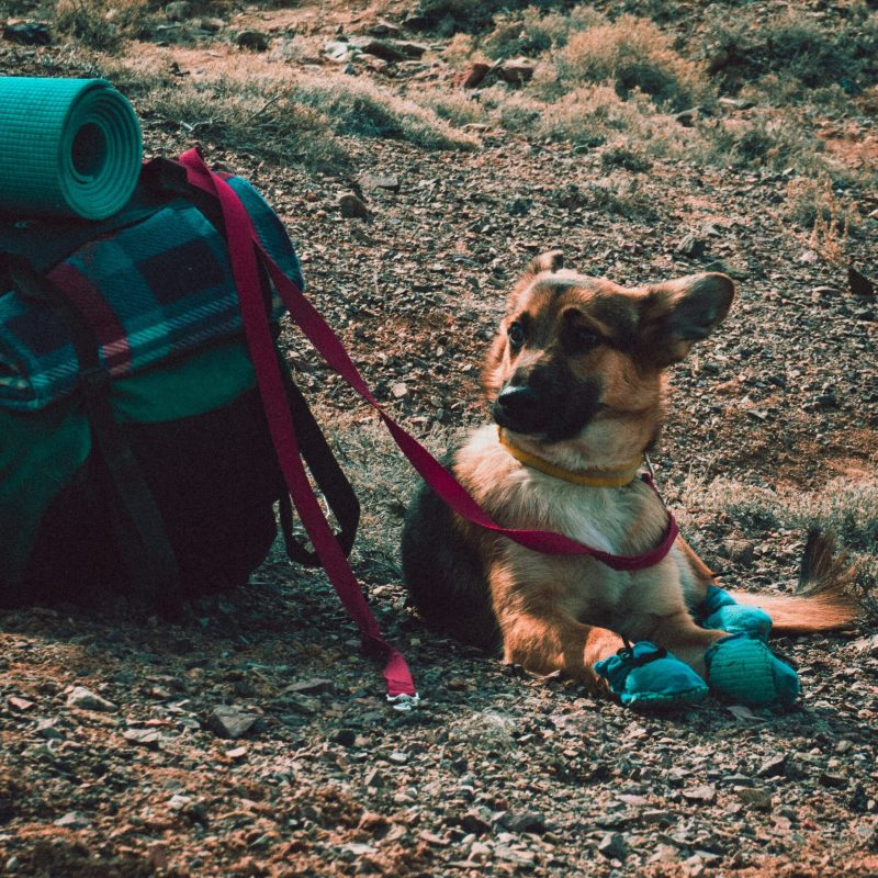 Going on holiday? Read this BEFORE you take your dog – Dog trainer tips