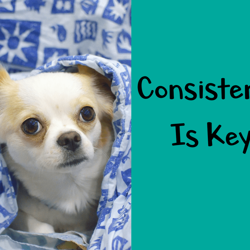 Consistency is Key – Dog Training Tips
