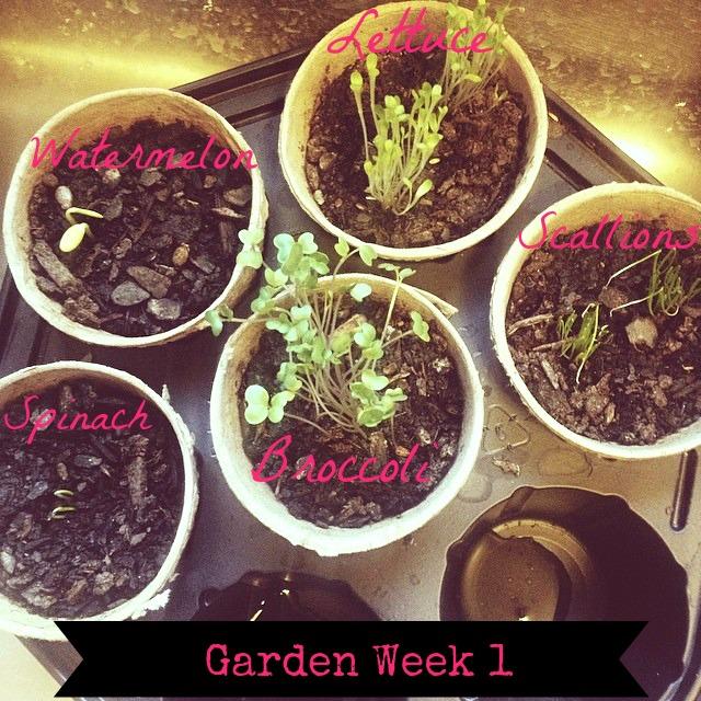 Garden 1 week blog