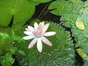 Pranayama for Meditation