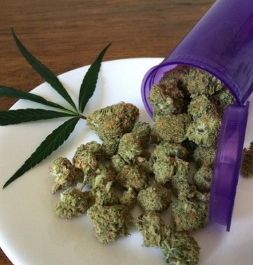 Drug Medicine Plant Hemp Cannabis Weed Marijuana