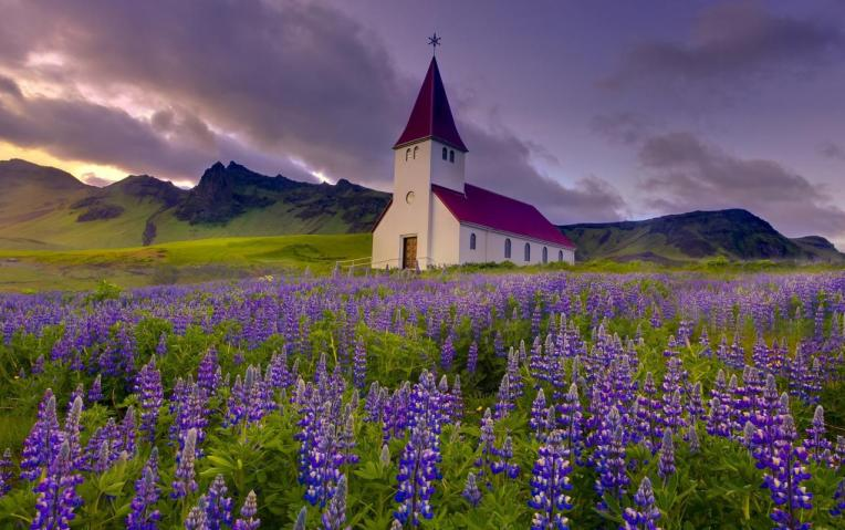 夏天隨處都可見到的紫色魯冰花花海