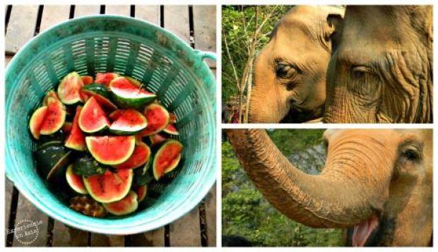almuerzo con los elefantes