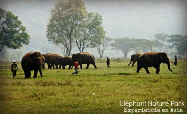 elephants thailand