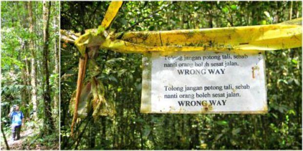 tanah rata trail