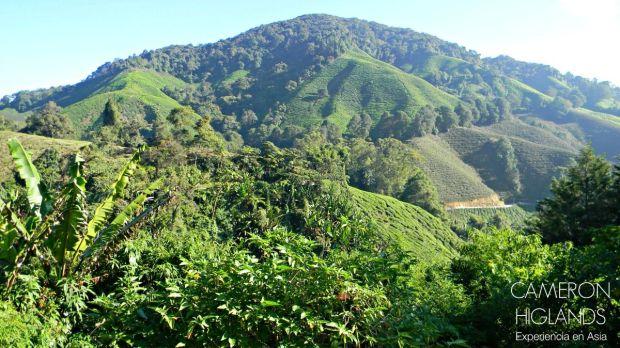 Cameron Highlands Malasia
