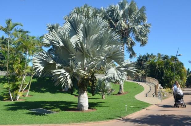 palmetum