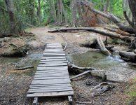 Puente Parque Nacional Tierra del Fuego