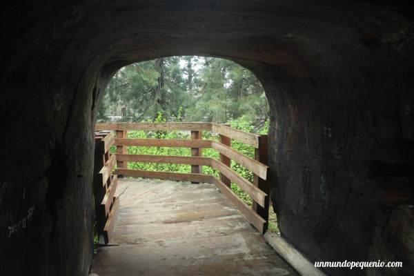 Camino a través de una secuoya