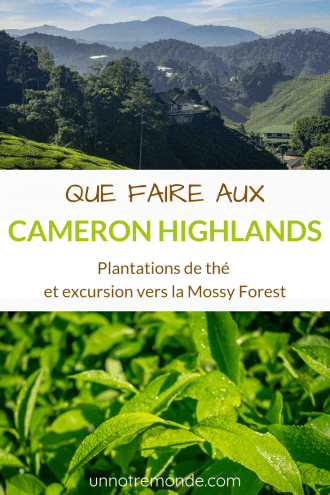 Que faire aux Cameron Highlands ? Plantations de thé et excursion vers la Mossy Forest