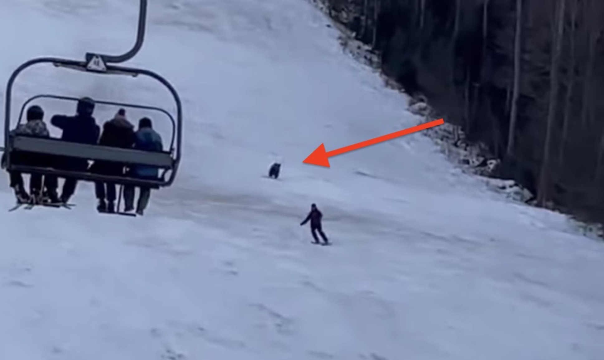 Insane Footage Of Snowblader Skiing For His Life Away From Charging Bear