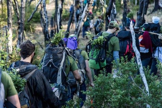 Jóvenes plantaron 11.500 árboles para recuperar un bosque incendiado en Argentina