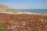 Se cumple la profecía de Ezequiel 47:10 en el Mar Muerto