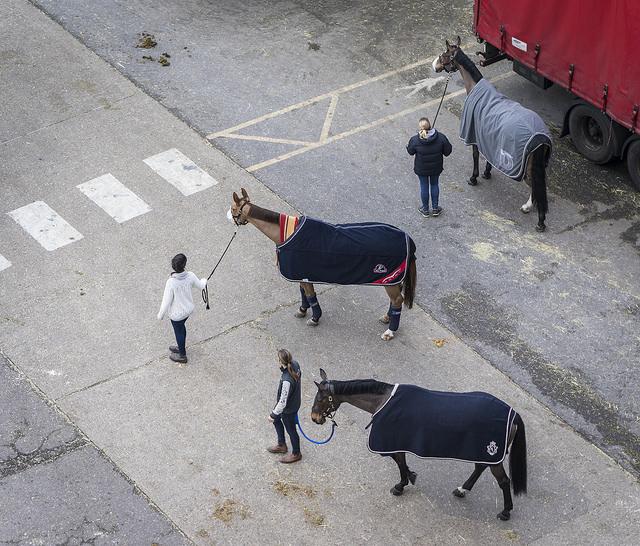 cavalli-alllcc