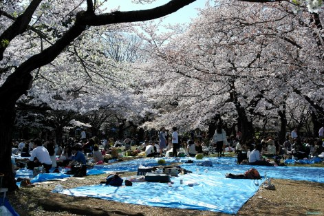 Meiji - Jingu Park