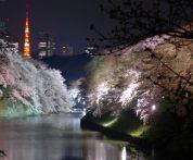東京の桜 カップルにオススメの穴場と名所は?散歩や散策ができるスポットは?