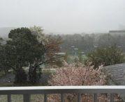 東京で4月に雪が降った原因は?過去に雪が降った年はあるの?