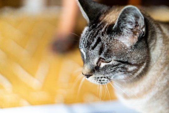Nico the cat looks homeward