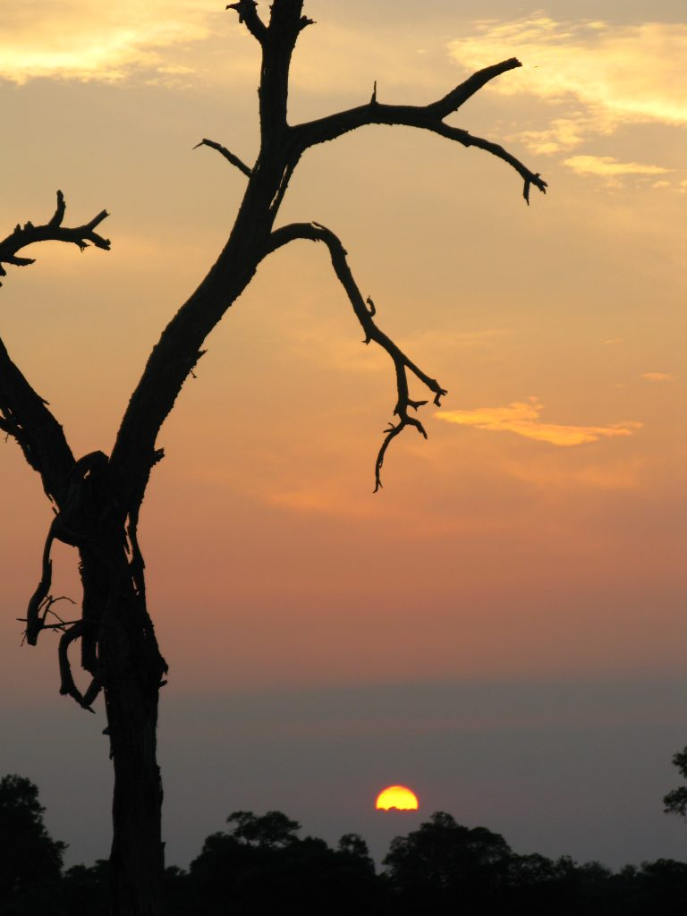 dead tree against the evening African sun