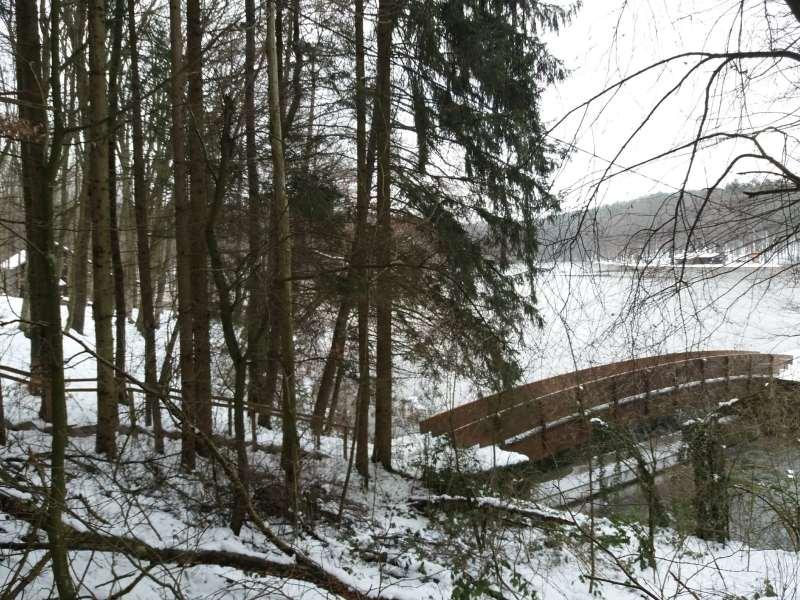 Healing forest Dobrovik Slovenia