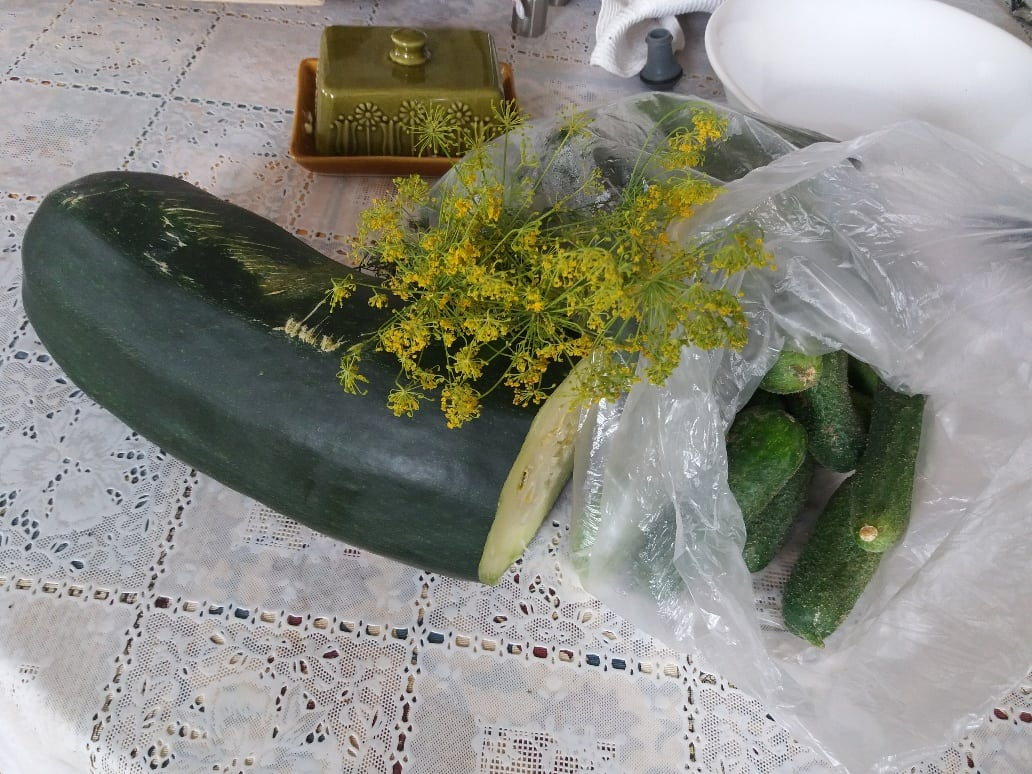From the garden