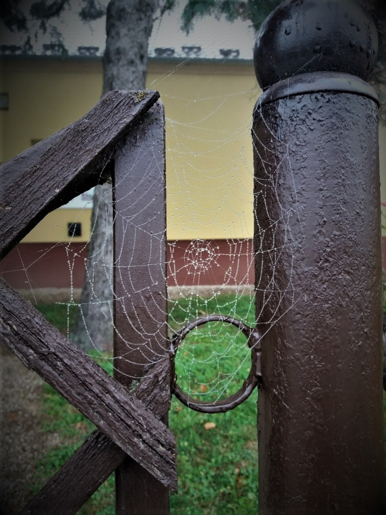 Spider web on a fence post