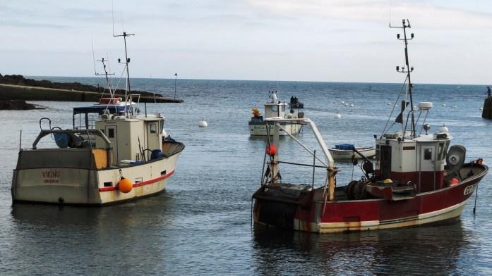 Port de Doëlan - Bateaux de pêche