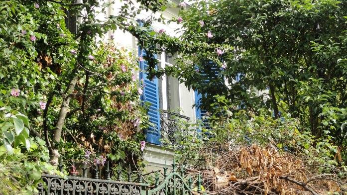 La Cité Bauer, Paris 14e - Volet bleu et végétation