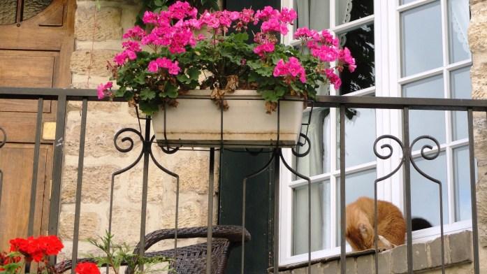 Rue du Square Montsouris, Paris 14e - Un habitant