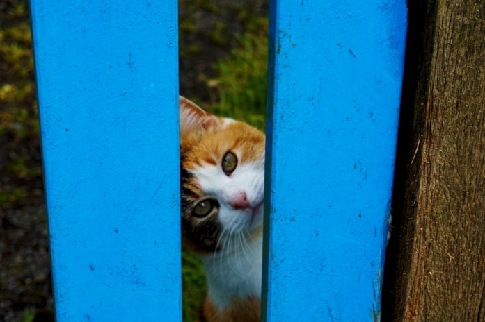 Vacances dans le Finistère Sud - Un petit chat