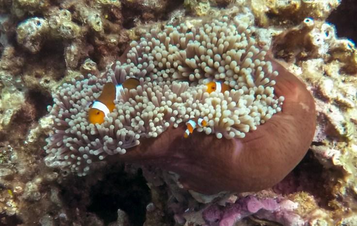 4 ou 5 mètres sous la mer