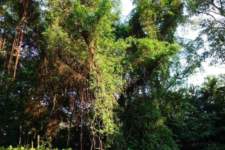 Une vraie petite jungle