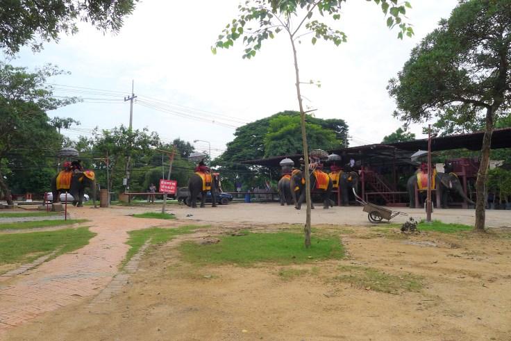 Ayutthaya Elephant Palace & Royal Kraal