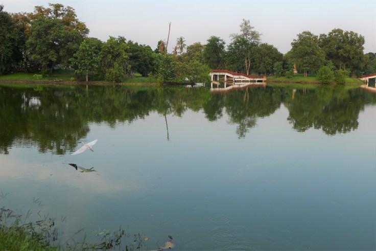 Ayutthaya - Heron