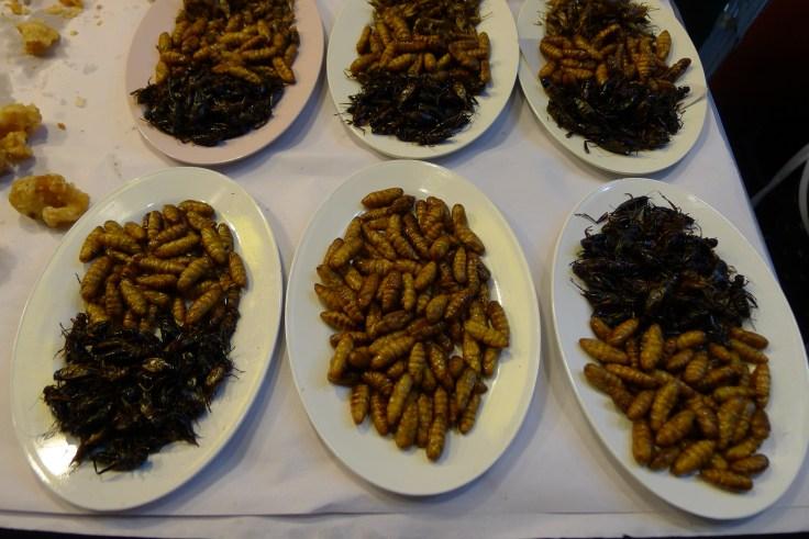 Chiang Rai bugs
