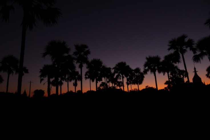 Bagan - Palmiers