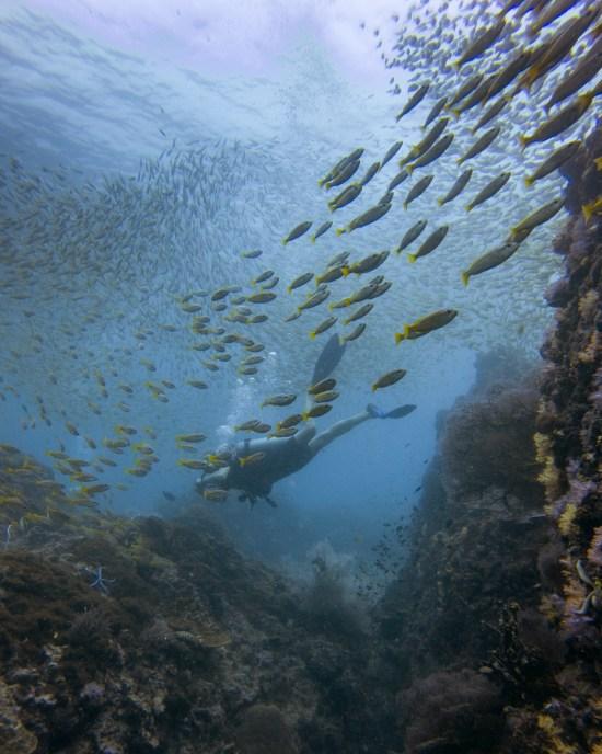 Thailande - Koh Bida - banc de poisson - plongeur