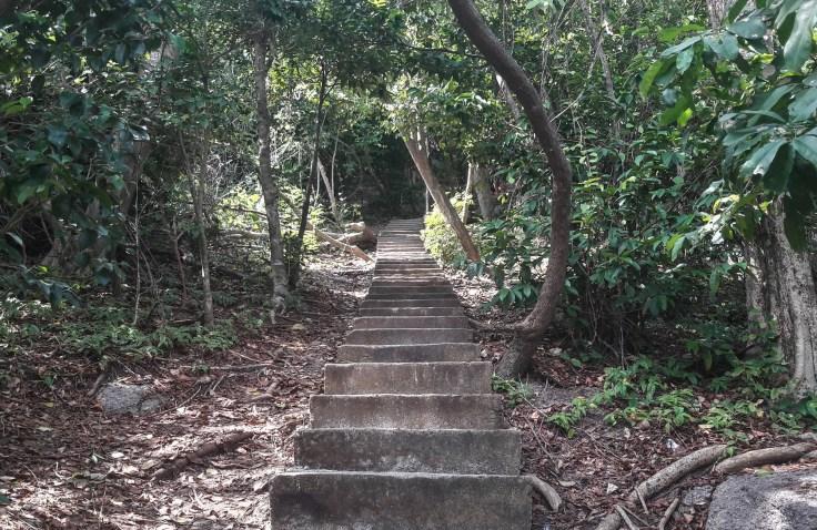Thilande - Koh Nungyuan - chemin - jungle