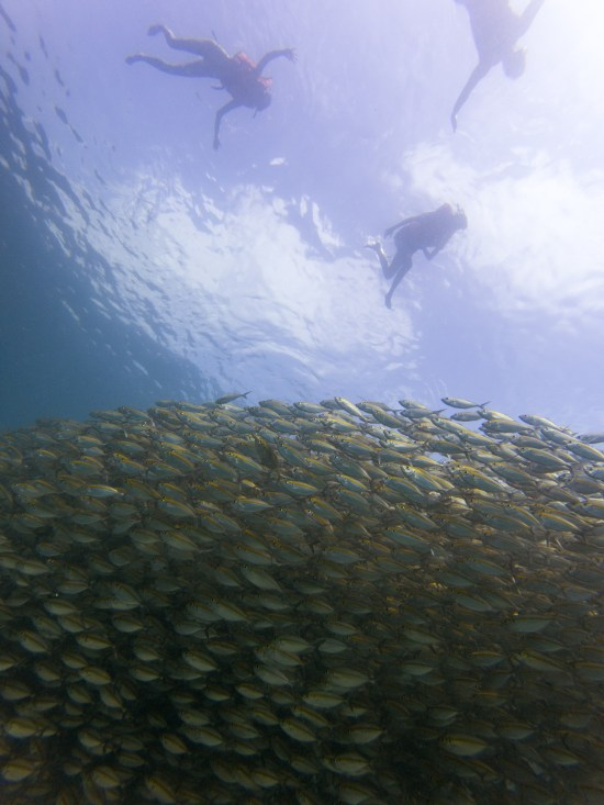 Thailande - Koh Tao - Snorkeling - banc poisson